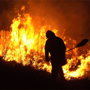 Pożar trawy, osy i fałszywy alarm