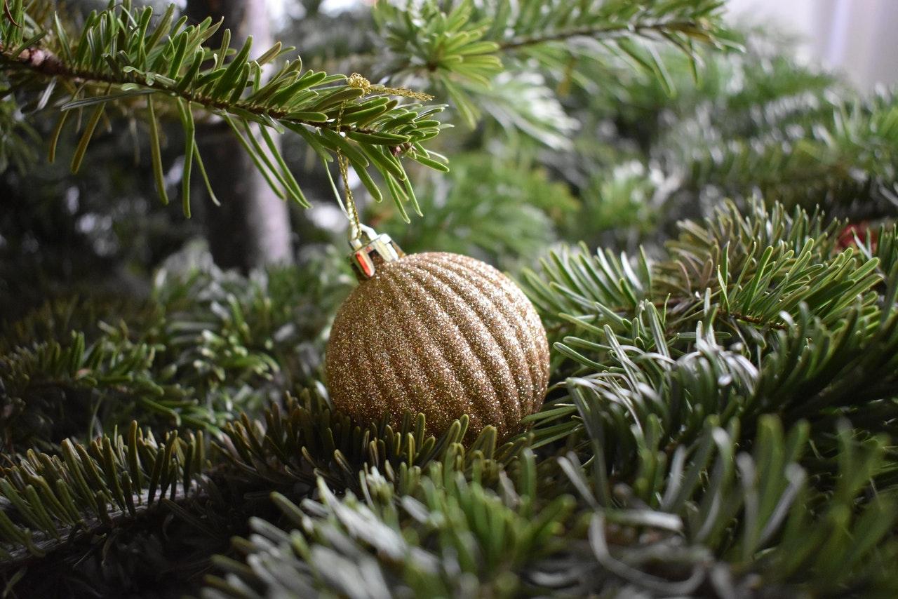 Pielęgnacja świątecznego drzewka w celu przedłużenia jego żywotności