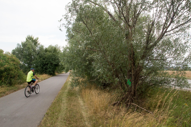 Widok na ścieżkę rowerową w kierunku Łężczoka. Po prawej stronie widać drzewa, które znajdują się w pasie drogowym. Pracownicy PZD oznaczyli suche konary, które kwalifikują się do wycięcia. Po lewej stronie widoczne są drzewa, które znajdują się poza pasem drogowym. Drogowcy przekonują, że nie mogą ingerować w tę zieleń, a to właśnie tam znajdują się opisane w artykule suche konary.